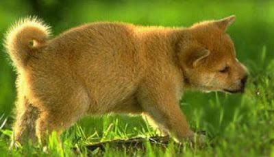 Pas jede travu zbog problema digestivnog trakta
