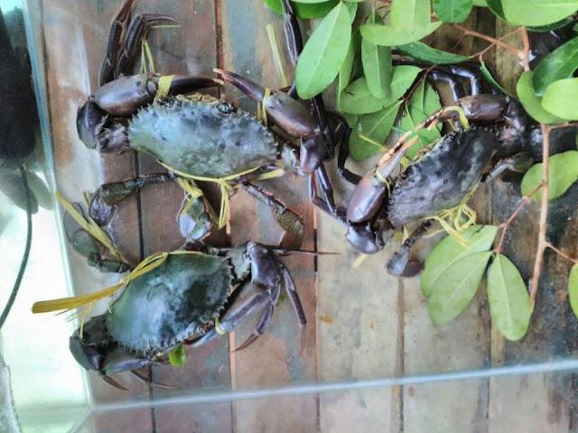 Hutan Bakau Seafood Restaurant Bintan