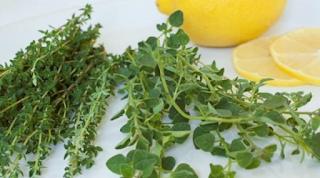Καρκίνος του παχέος εντέρου: Το ελληνικό βότανο που κάνει θαύματα