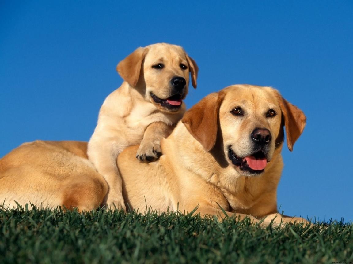 nice puppies wallpaper hd - photo #23