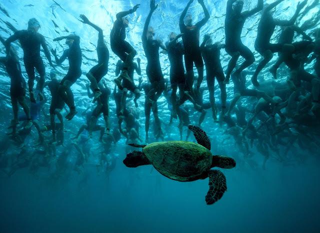зеленая морская черепаха, также известная как «Honu»