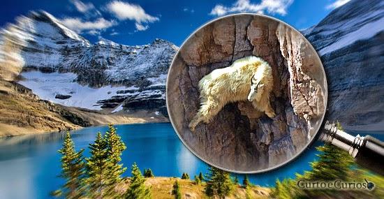 'Cabra-aranha': as alpinistas das montanhas geladas