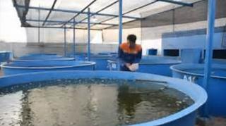 tu sistem dalam memelihara ikan gurame d Kabar Terbaru- BUDIDAYA IKAN GURAME SISTEM BOSTER