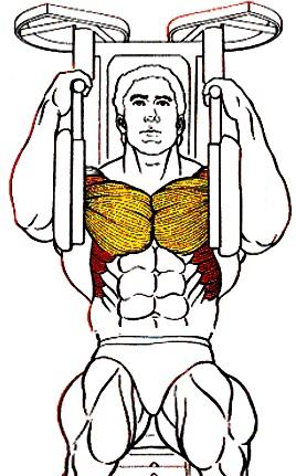 Dibujo de un ser humano haciendo ejercicio para sus pectorales