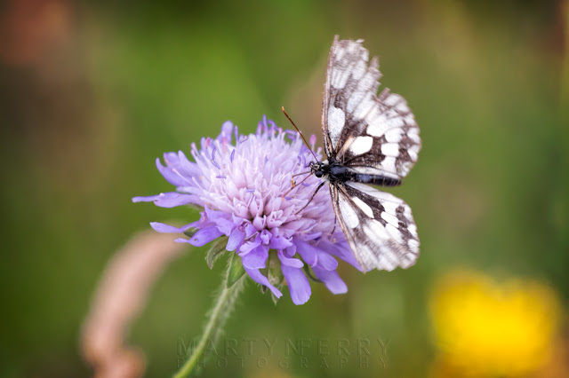 Macro image of butterfly on a lilac flower at Barnack Hills & Holes