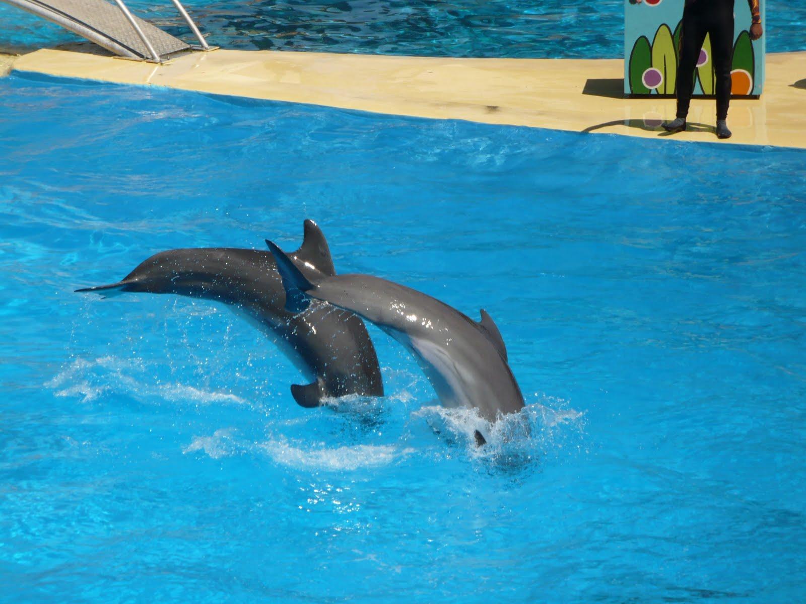 Code promo marineland rencontre avec les dauphins