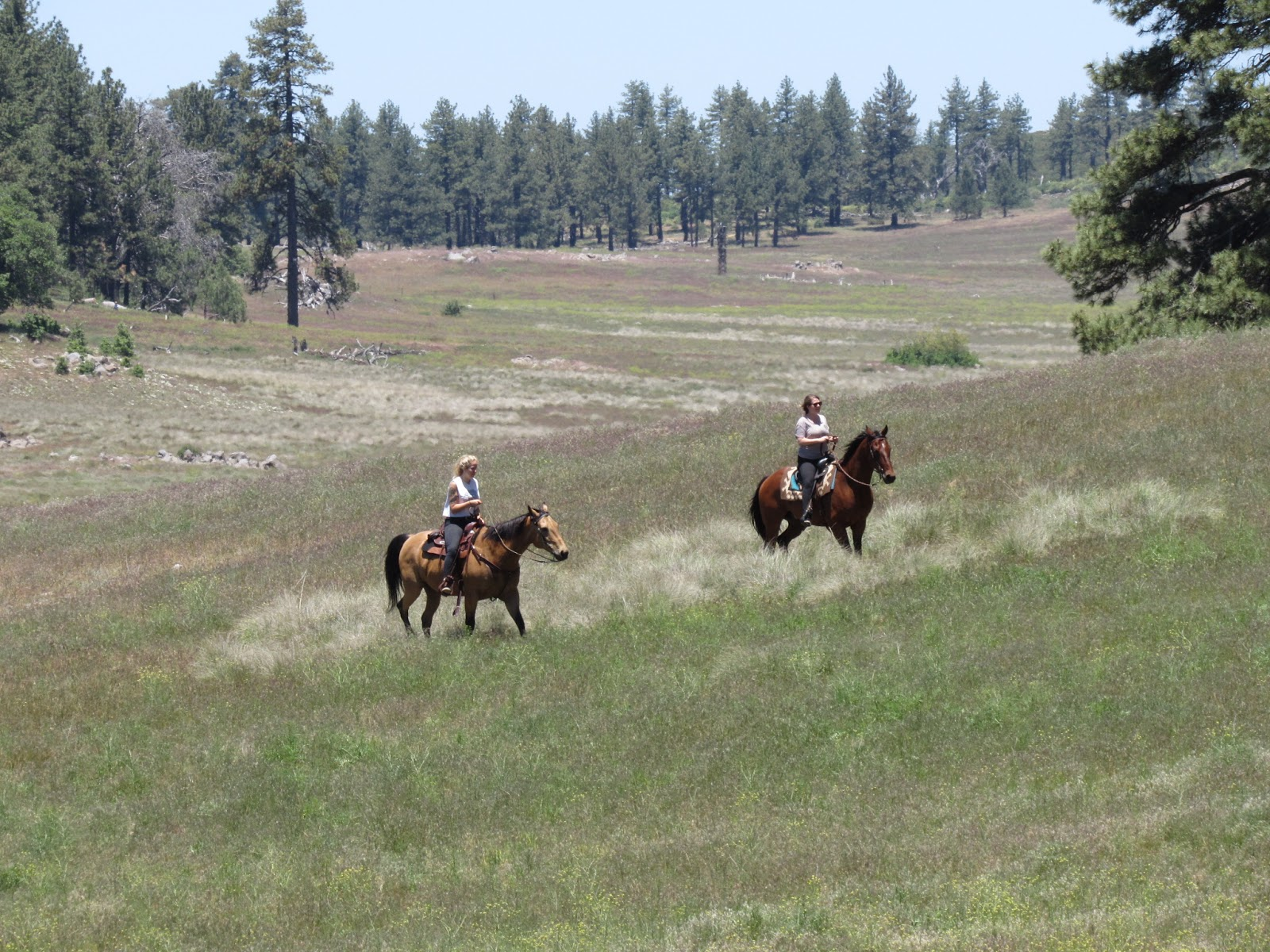 i always expect to see hoss little joe and pa cartwright come riding through the meadow but had to settle for these two women on horseback today