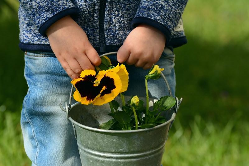 Criança com balde com amor-perfeito