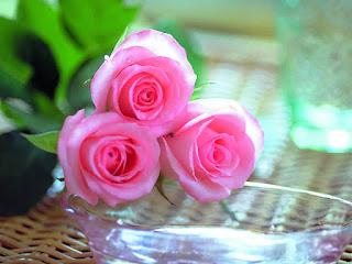 صور ورد , صور الورد , صور زهور , اجمل صور ورود
