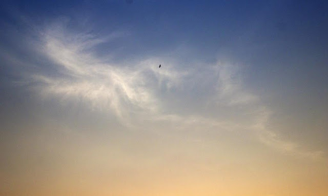 skywatch, evening, october, heat, clouds, bird, colourful, mumbai, india,