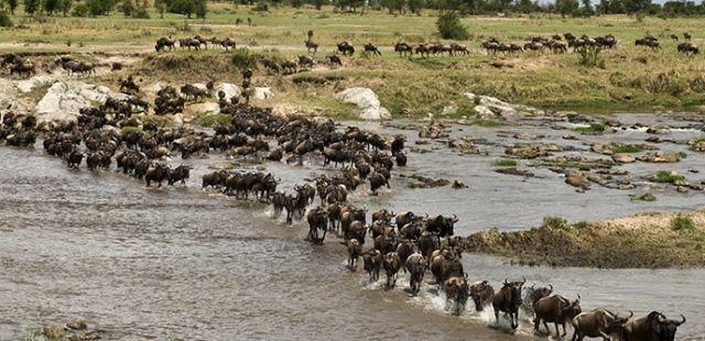 Fakta Kenya Yang Menarik Untuk Kita Ketah 13 Fakta Kenya Yang Menarik Untuk Kita Ketahui