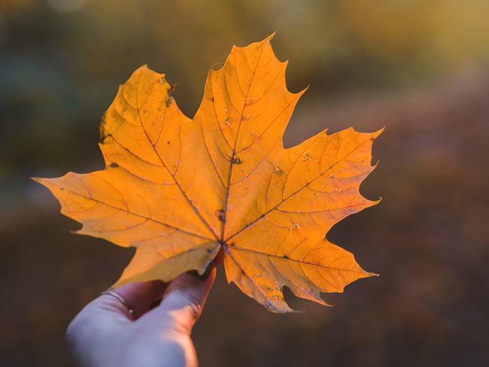 zdjęcie liścia