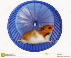 Bonjour Hamster Gold Race
