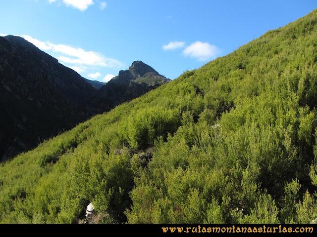 Ruta Tromeu y Braña Rebellón: Sendero entre los arbustos