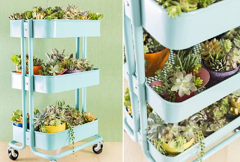 Grow Succulents in a Rolling Cart