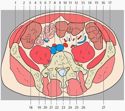 горизонтального томографического среза на уровне L5