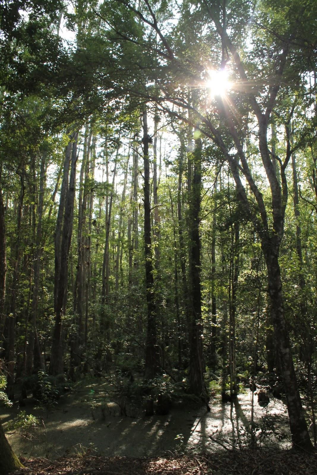 En el Green Swamp