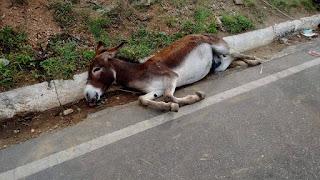 Acidente entre veículo e carroça puxada por jumento deixa animal morto em Picuí