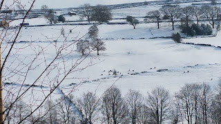 Latest of our sheep images