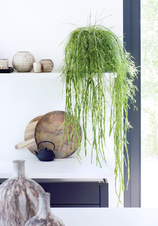 Plantas De Interior Colgantes - Plantas-colgantes-de-interior