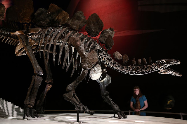 Male or female? Paleontologist challenges evidence of sex differences among dinosaurs