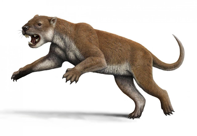 Elbows of extinct marsupial lion suggest unique hunting style
