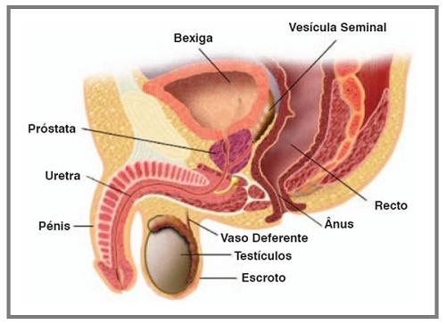 La testosterona puede causar cáncer de próstata como el correo. ru