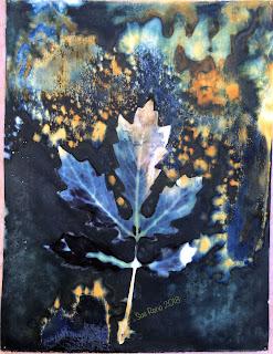 Wet cyanotype_Sue Reno_Image 378