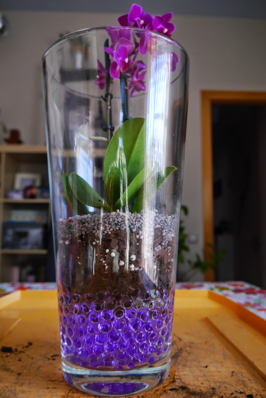 Mr washisan orqu dea mariposa mini plantada en gel dentro for Jarron cristal decoracion