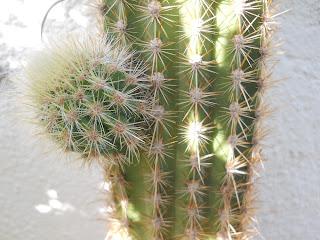 cactus del ordenador