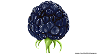 blackberry fruit clipart royalty free