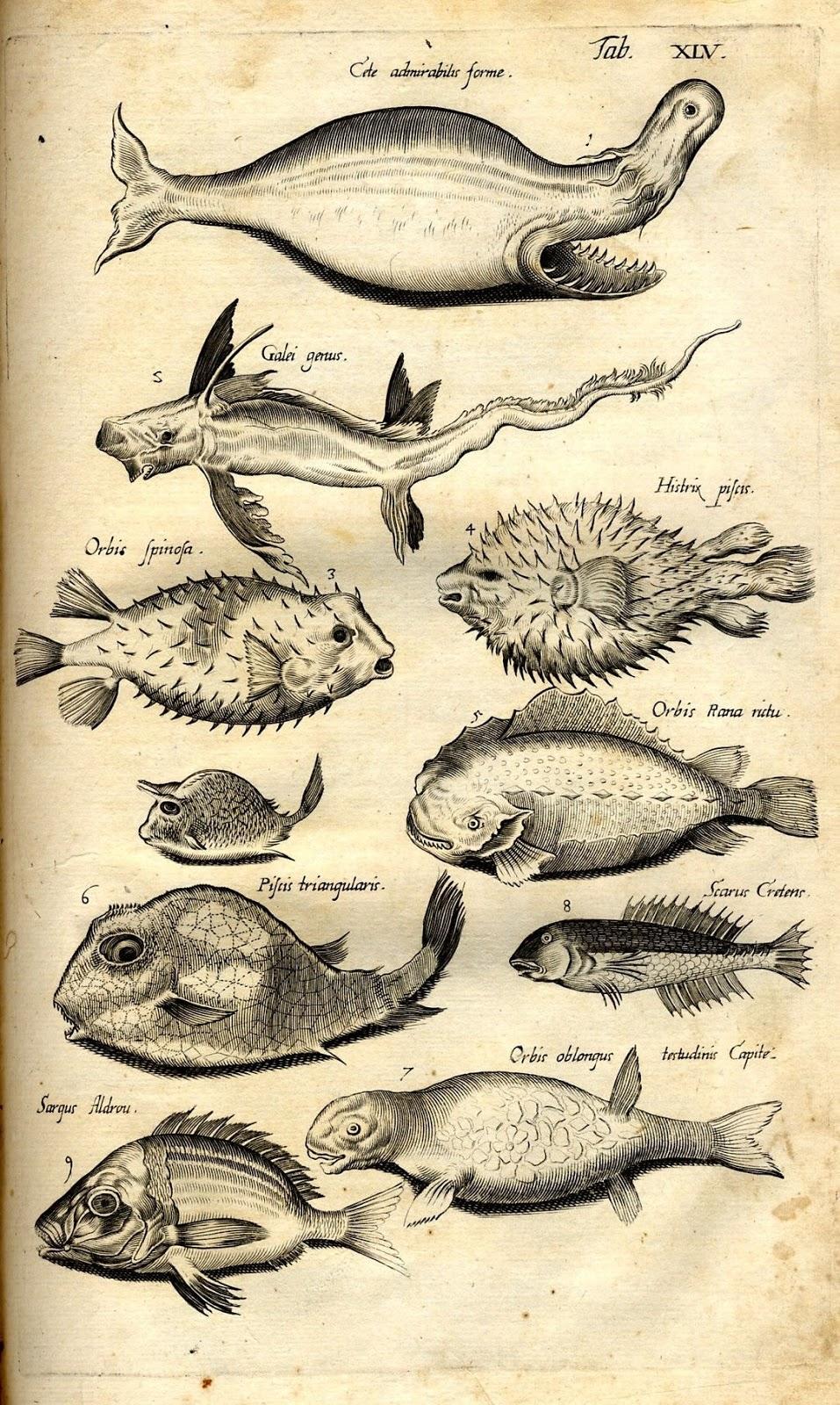 Peixe | Aspectos Biológicos dos Peixes