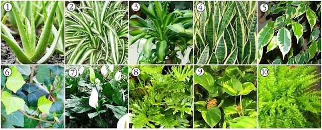 10 plantas purificadoras que ajudam a purificar o ar da casa
