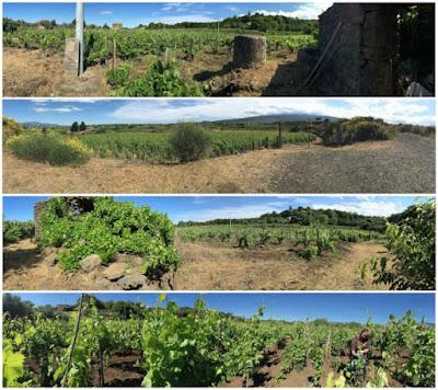 vigne etna alberello