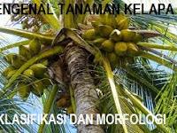 Mengenal tanaman kelapa dari jenis, klasifikasi dan morfologi secara lengkap