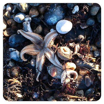 Sea creatures, Worthing beach