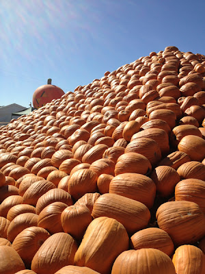 KimberlyK 360 Uesugi Farms Pumpkin Park  San Martin CA