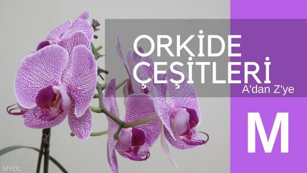 Orkide Çeşitleri M Harfi