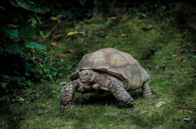 Facts about Tortoise in Hindi