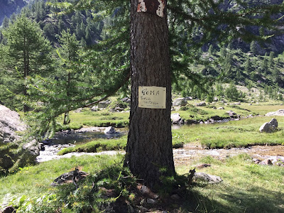 Only in Italy can you find a tree with a sign for Toma on it