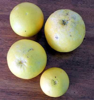 white grapefruit windfall