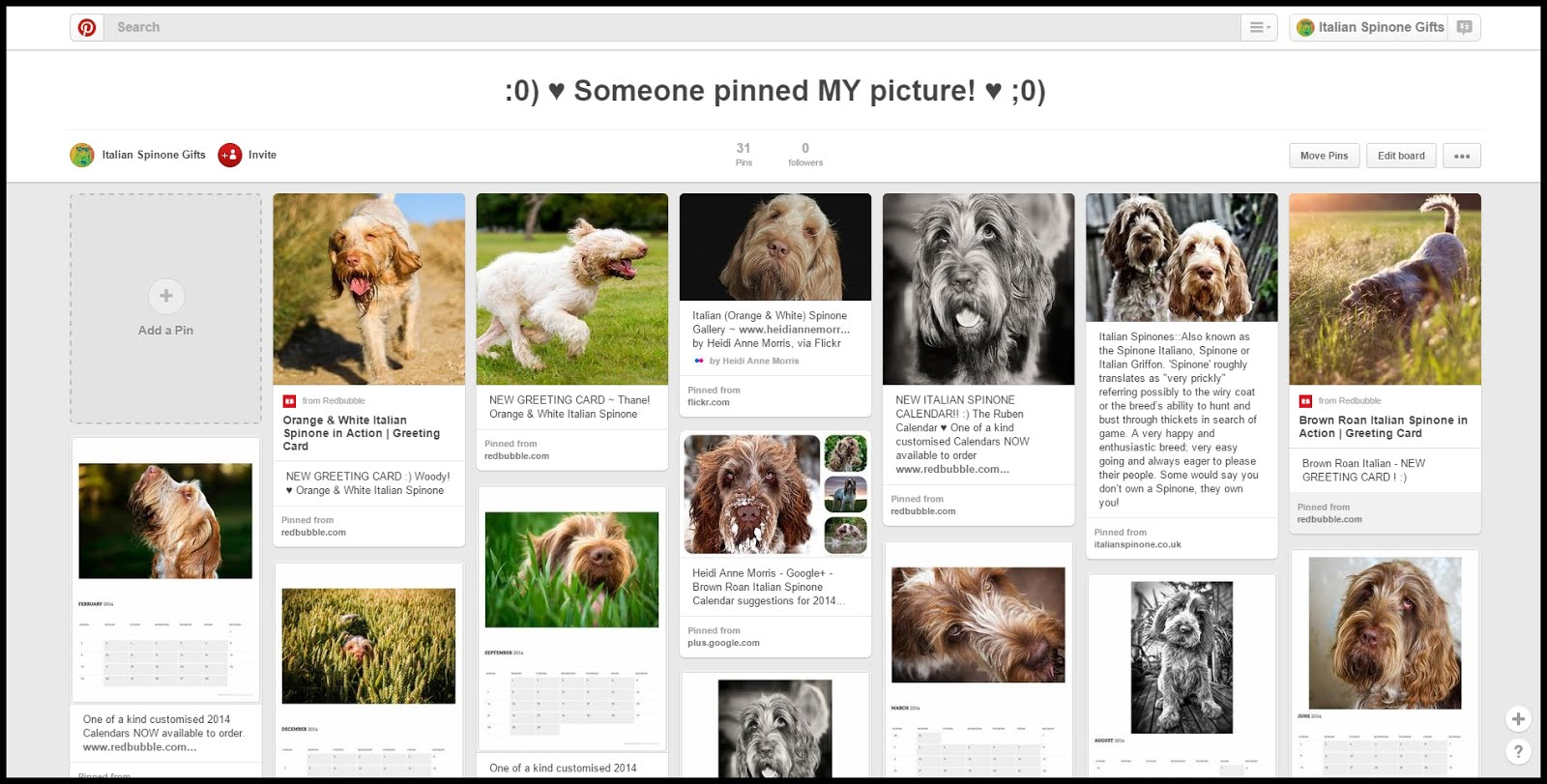 Italian Spinone Gifts & Pictures on Pinterest