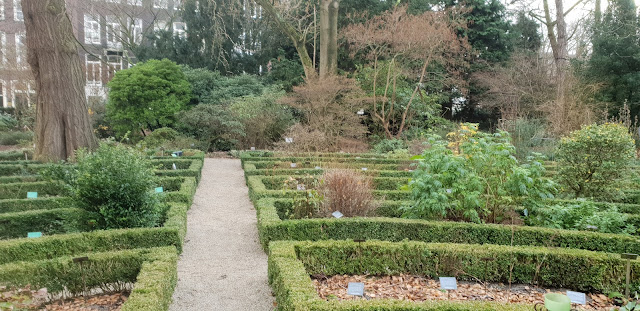 הגן הבוטני באמסטרדם