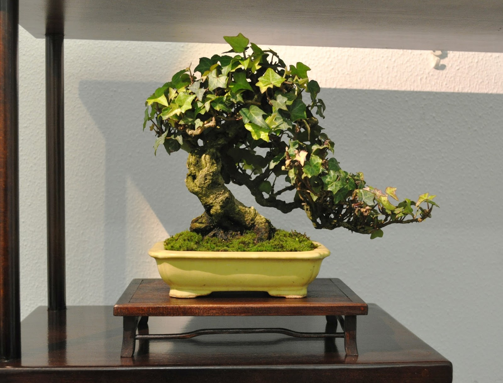 Al Gharb Bonsai