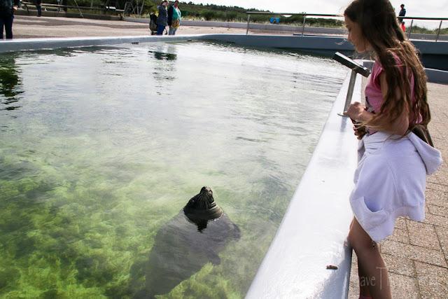 Seehundbecken Ecomare auf Texel