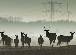 Foto cover Natuur in Nederland: beheren, behouden of beheersen?