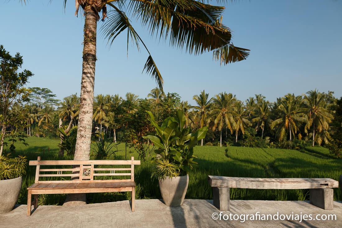 Arrozales en las afueras de Ubud