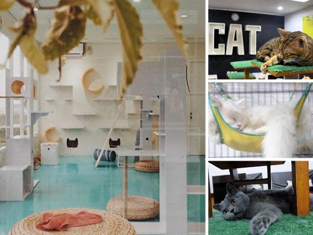 Cat's and Ice Cream, Kafenya Para Pencinta Kucing di Bandung