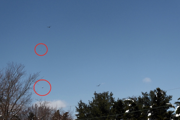 UFO News ~ Two UFO Orbs Following Eagle Recording Its Behavior Over Mountain In New Jersey plus MORE UFO%252C%2Balien%252C%2Bsighting%252C%2BET%252C%2Bnews%252C%2B