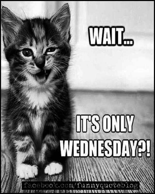 Wednesday cat Memes, Wait it's only Wednesday